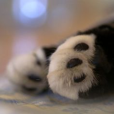 Cats leave paw prints on your heart.  I love cats paw pads. They are just so cute!