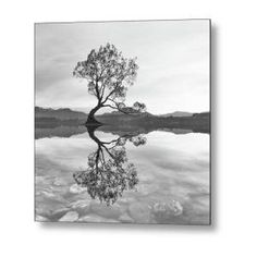 Black and White Wanaka Tree Metal Print by Joshua Small