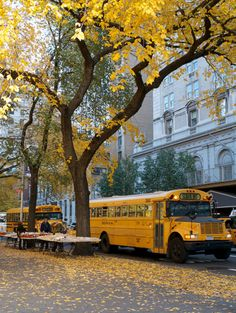 School Buses are back on the road