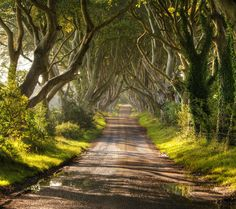 The Dark Hedges, a stretch of Bregagh Road lined with beech trees near Armoy, Ireland. This is also where they filmed a scene from Game of Thrones seen here http://farm8.staticflickr.com/7276/7570159364_481e160ba8_z.jpg