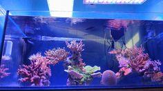 10 Steps to a Cleaner Aquarium Aquarium Set, Marine Aquarium, Saltwater Aquarium, Fresh Water Tank, Salt And Water, Glass Cleaning, Led Aquarium Lighting, Fish Tanks, Garage Ideas