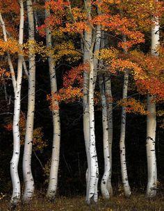 """seasonalwonderment: """"Autumn """""""