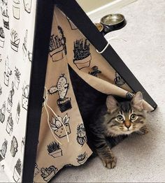 Searching the place for Nesting, Cuddling, & Staying Cozy? Dog & Teepee - more than just dog and cat bed. We've created a space that your fur babies will love calling home. Photo by Cat Teepee, Teepee Bed, Take A Nap, Peek A Boos, Dog Bed, Cuddling, Fur Babies, Cute Pictures, Teepees