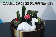 Camel Cactus Planter DIY   The Band Wife