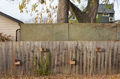 blog_wood_planters_boxes_fence.jpg (1200×797)
