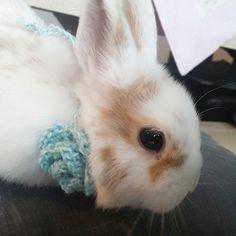Bunnylove Bunny Zwergkaninchen