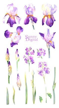 Check out this item in my Etsy shop https://www.etsy.com/listing/511764807/purple-irises-18-elements-watercolor