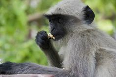 The nut Cracker Photo by Sayan Biswas -- National Geographic Your Shot