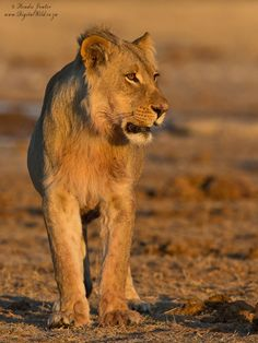 Photograph Future King by Hendri Venter on 500px