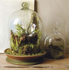 musings of an optimist: Terrariums and thrifting