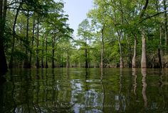 #ridecolorfully down to the swamps for some beautiful nature and outstanding people in Bayou Pigeon.