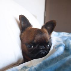 MONDAYS - 16 Times Gizmo The Griffon Dog Is You When You're Grumpy