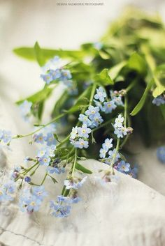 Tiny boquet of forget-me-nots