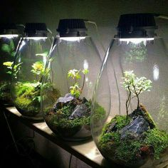 Creating a terrarium fairy garden is a fun and challenging project for all ages, sum up families, siblings, best links and solo gardeners! Potted Plants, Indoor Plants, Garden Plants, Paludarium, Vivarium, Aquarium Design, Bottle Garden, Succulent Terrarium, Glass Terrarium