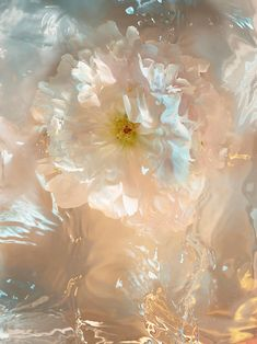 Still life photographer Candice Milon Look Wallpaper, Aesthetic Pastel Wallpaper, Aesthetic Backgrounds, Aesthetic Wallpapers, Water Aesthetic, Flower Aesthetic, Aesthetic Art, Aesthetic Pictures, Aesthetic Fashion