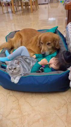 Super Cute Puppies, Cute Baby Dogs, Cute Funny Babies, Baby Cats, Funny Cute, Baby Corgi, Cute Little Animals, Cute Funny Animals, Cute Cats