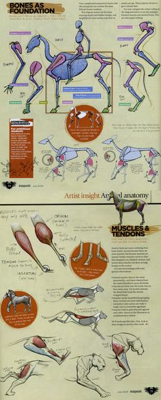 Animal Anatomy- By Marshall Vandruff, Pg. 2