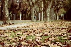 Mañana de domingo de otoño en Ciudad Jardin...