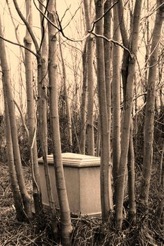 The Cemetery Traveler - by Ed Snyder: Thanksgiving and Abandoned Cemeteries