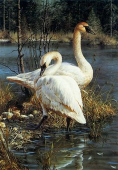 Carl Brenders - White Elegance - Trumpeter Swans - Search Gallery One for Brenders limited edition prints, giclee canvases and original paintings by internationally-known artists Wildlife Paintings, Wildlife Art, Animal Paintings, Bird Paintings, Vida Animal, Trumpeter Swan, Art Gallery, Realistic Oil Painting, Bird Pictures