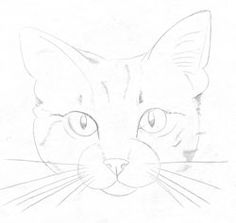 Draw a cat: Step by step