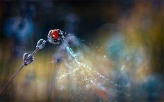 Ladybug, photo by Magdalena Wasiczek