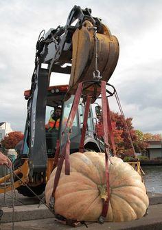 Giant pumpkin   was  moved into the lake via crane.