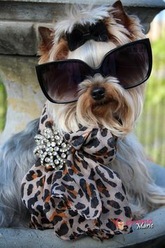 All-decked-out doggie