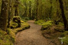 Kepler Great Walk, Fiordland, The South Island, New Zealand