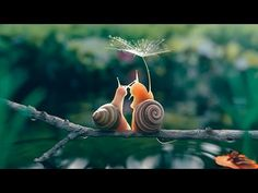 Life in the Undergrowth - 01 - Invasion of the Land | David Attenborough...
