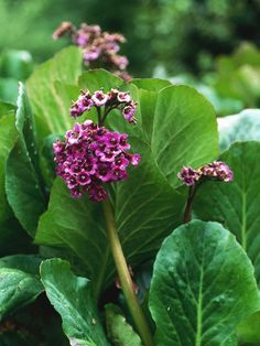 Six Groundcover Plants for Damp Shade : Page 06 : Outdoors : Home & Garden Television