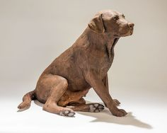 Labrador sculpture. I was commissioned to make three posthumous sculptures of Labradors from the same family. Charity, the chocolate Labrador, had been rescued from life as a breeding bitch in a puppy farm. She had clearly had many litters and had developed arthritis in her hip joint. This made her sit in a very specific way. All this needed to be captured in the dog sculpture, along with her large, expressive ears.