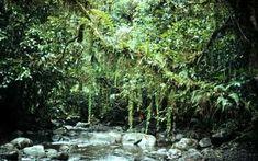south east asian rain forest