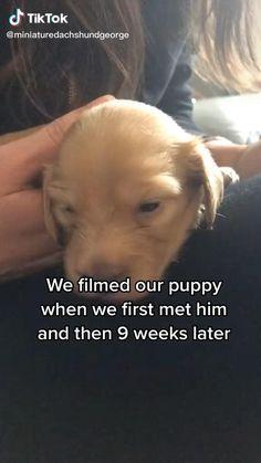 Cute Baby Dogs, Cute Funny Dogs, Cute Funny Animals, Cute Puppies, Super Cute Animals, Cute Little Animals, Huge Dogs, I Love Dogs, Funny Talking Dog