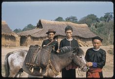 Hmong pony. The small Hmong Horse is native to Vietnam and named after the tribe who have and breed them. Although they are very small, the have no problem bearing the weight of a full-grown man.