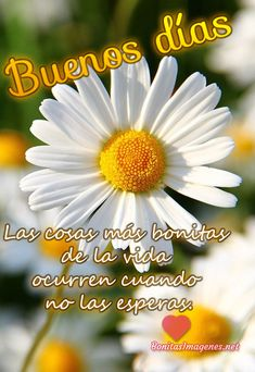 Beautiful Butterflies, Beautiful Birds, Motivational Phrases, Inspirational Quotes, Happy Week, Days And Months, Morning Greetings Quotes, Spanish English, Love Phrases