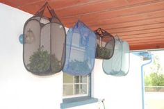 This is brilliant for air drying large quantities of herbs at one time! The collapsible, mesh laundry bag!