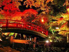 紅葉!絶景!秋の京都ライトアップ名所10選~古都を華麗に彩る光のショー~│観光・旅行ガイド - ぐるたび Doi Song, Sydney Harbour Bridge, Japanese Culture, Japan Travel, Kyoto, Beautiful Places, Building, Autumn Colours, Colors