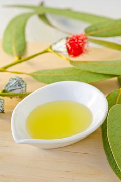 eucalyptus essential oil massage for phlegm