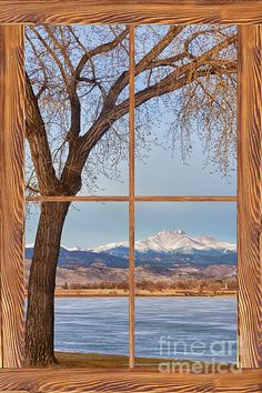Looking out on a big tree with a view across a winter lake to the Colorado Rocky Mountains Twin Peaks, Mt Meeker 13,811 feet and Longs Peak 14,256 feet through a barn wood picture window.  Fine art photography prints, decorative canvas prints, acrylic prints, metal print wall art for sale on BoInsogna.com .  Prints starting at $25. Copyright: James Bo Insogna #InsognaGallery #WindowArt