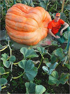 Atlantic Giant Pumpkin -