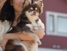 犬と私の10の約束犬の十戒という散文詩をご存知ですか 愛犬から飼い主への大切な約束です家族に迎えるということは責任があるという事を考えさせらます ペットが欲しい犬を飼いたいうちに迎えたいという方はぜひ一度ご覧になってください  犬の十戒  1 私の寿命は年長ければ年 何があっても最後まであなたのそばにおいてもらえますか 私を飼う前にどうかそのことをよく考えてください  2 あなたが私に望んでいることをちゃんと分かるようになるまで少し時間をください  3 私を信頼して下さいそれが何より嬉しいのです  4 私のことをずっと叱り続けたり罰として閉じ込めたりしないで下さい あなたには仕事や楽しみもあるし友達もいるけれど私にはあなたしかいないのです  5 時には私に話しかけて下さい たとえあなたの話す言葉はわからなくてもあなたの声を聞けば私に何を言ってくれているのか分かるのです  6 私のことをいつもどんな風に扱っているか考えてみてください あなたがしてくれたことを私は決して忘れません  7 私を叩く前に思い出して下さい…