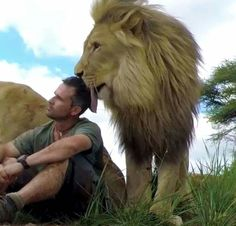 The Kevin Richardson Wildlife Sanctuary's mission is to provide a self-sustain. Beautiful Cats, Animals Beautiful, Animals And Pets, Cute Animals, Kevin Richardson, Lion Love, Cat Signs, Big Cats, Animal Photography