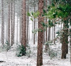 I`m dreaming of a white Christmas.....