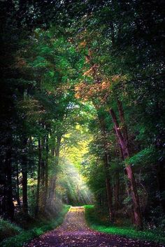 Fascinating Photographs of Forest Paths to another world (34)