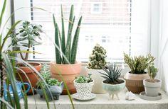Plant Care for Winer via Front + Main, West Elm | Gardenista