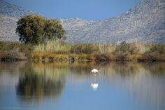 #Saltlake #Kos Greece Kos, Flamingo, Greece, Salt, Birds, River, Island, Nature, Photography