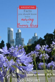 Living in Buenos Aires: need-to-knows & nice-to-knows - Becci Abroad Trip Planner, Travel Planner, Group Travel, Family Travel, Latin America, South America, Travel Articles, Travel Tips, Amazing Destinations