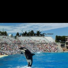 Sea World San Diego (Shamu!)