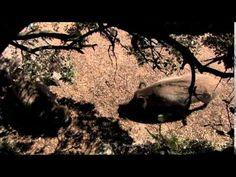 Wild Life - Iberian Europe Save Wildlife, Wild Life, Habitats, Survival, Europe, World, Wildlife Nature, The World